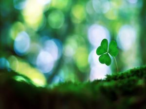 shamrock-wallpaper-for-pc_1152x864_7735331